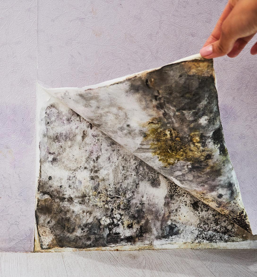 mold remediation standards